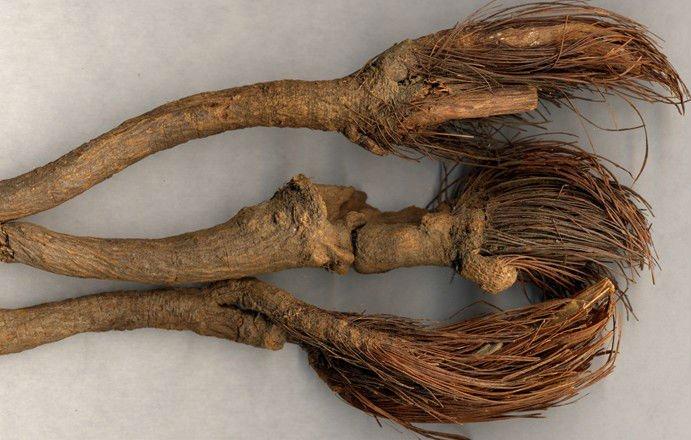 Tinktur - Tinktura Maralí kořen 3x po 50 ml. (Tinktura z maralu)
